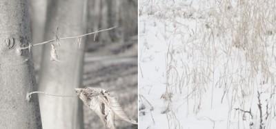 4. Tweeluik sneeuw en boom